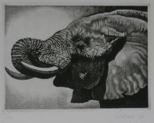 Elefante profilo